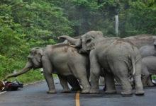 Photo of जशपुर जिले में जंगली हाथी ने किया दंपति पर हमला, पति की मौत