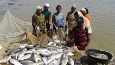 Photo of छत्तीसगढ़ में मछली पालन को कृषि का दर्जा, भूपेश सरकार का सराहनीय फैसला
